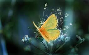 butterfly-picture